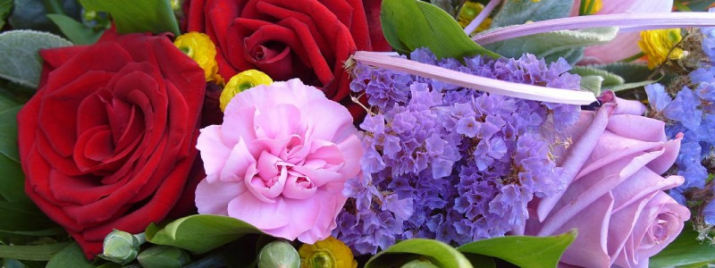Schnittblumen Langer Frisch Halten Blumenpapa