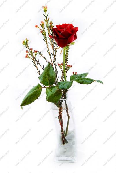 blumenstrau rote rose mit solit rvase kategorie rosen blumenpapa. Black Bedroom Furniture Sets. Home Design Ideas
