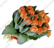 Orange Tulpen im Bund